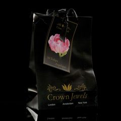 Javado Crown Jewels - Tulipa Angelique 30 Bulbs