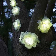 Smart Garden White Rose Solar Light String - 10 Roses