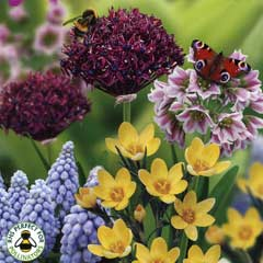 Taylors Bees and Butterflies Collection - 75 Bulbs